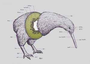 kiwi_bird_fruit