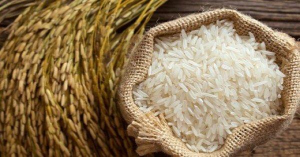 A rizsfajták tápértéke szempontjából
